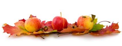秋天槭树叶子和三个苹果 库存照片