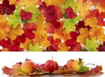 秋天槭树叶子和三个苹果 库存图片