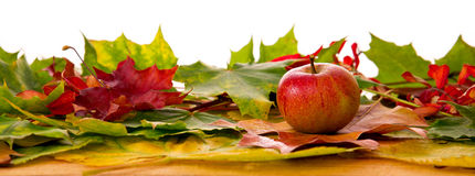 秋天槭树叶子和苹果背景  免版税图库摄影