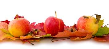 秋天槭树叶子和苹果 免版税库存照片