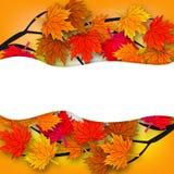 秋天槭树和它的分支 库存照片
