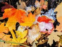 秋天槭树和橡木秋天叶子在罗斯峡谷黄色叉子的森林地板和大岩石足迹上关闭在Oquirrh Mountai 免版税库存照片
