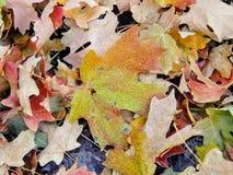 秋天槭树和橡木秋天叶子在罗斯峡谷黄色叉子的森林地板和大岩石足迹上关闭在Oquirrh Mountai 库存照片
