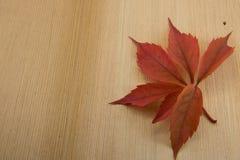 秋天槭树在木背景离开与复制空间 名列前茅vi 图库摄影