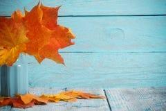 秋天槭树在花瓶把束留在木背景 免版税图库摄影