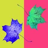 秋天槭树在葡萄酒样式把背景留在 秋天到达 幻想五颜六色的背景 免版税库存照片