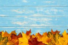 秋天槭树在蓝色木背景留下说谎 免版税库存照片