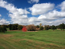 秋天槭树明尼苏达红色结构树 免版税库存照片
