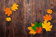 秋天槭树框架在木背景离开 设计和空间文本的 免版税库存图片