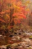 秋天槭树横向  图库摄影