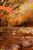 秋天槭树横向  免版税图库摄影
