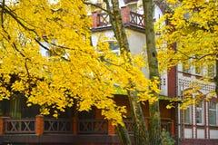 秋天槭树的分支以老大厦为背景的 免版税图库摄影