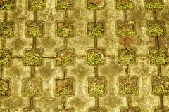 秋天槭树石头块步行道路在公园有绿草背景 免版税图库摄影