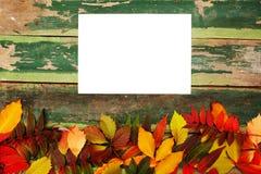 秋天槭树离开在老绿色木背景与拷贝空间 免版税库存照片