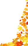 秋天槭树背景 免版税库存图片