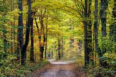 秋天槭树被排行的路 免版税库存照片