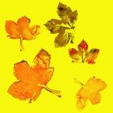 秋天槭树离开混杂的秋天颜色 图库摄影