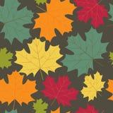 秋天槭树离开背景 库存图片
