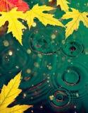 秋天槭树黄色叶子 免版税库存照片