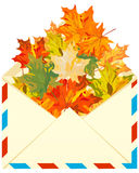 秋天槭树 免版税图库摄影