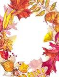 秋天模板背景 季节性例证 网横幅模板 额嘴装饰飞行例证图象其纸部分燕子水彩 库存照片