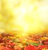 秋天横向。 免版税库存图片