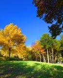 秋天横向公园结构树 免版税库存照片