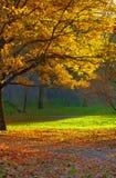 秋天横向公园 免版税图库摄影