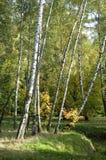 秋天横向公园sokolniki 免版税库存图片