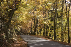 秋天横向季节 库存照片