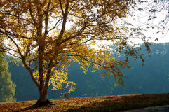 秋天横向早晨 免版税库存图片