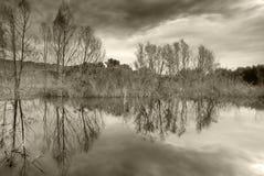 秋天横向池塘小的结构树黄色 免版税图库摄影