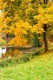 秋天横向池塘结构树 免版税图库摄影