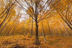 秋天横向结构树 免版税库存照片