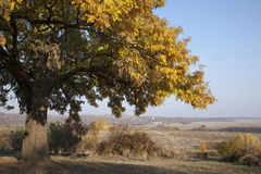秋天横向结构树 库存图片