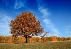 秋天横向结构树 免版税库存图片