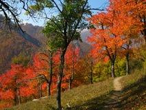 秋天横向罗马尼亚语 免版税库存图片