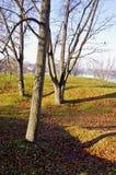 秋天横向遮蔽结构树 库存照片