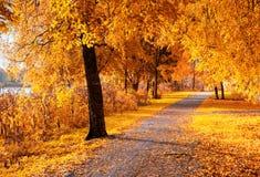 秋天横向 与下落的秋叶的秋天树在晴朗的天气 图库摄影