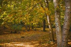 秋天横向 五颜六色的秋天在森林秋天背景中 免版税库存照片
