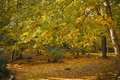 秋天横向 五颜六色的秋天在森林秋天背景中 库存照片