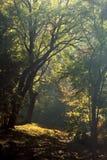 秋天横向 公园在秋天 免版税库存图片