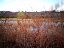 秋天横向 在葡萄酒生动的颜色的艺术性的神色 免版税图库摄影