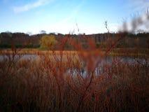 秋天横向 在葡萄酒生动的颜色的艺术性的神色 免版税库存图片