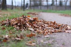 秋天横向 堆下落的叶子 库存图片