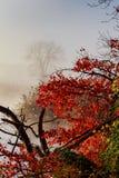 秋天横向 小森林的河 图库摄影