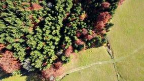 秋天横向 山脉倾斜有森林顶视图 影视素材