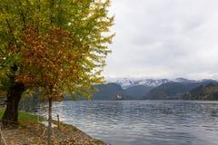 秋天横向 布莱德湖在11月 库存照片