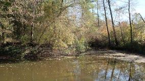 秋天横向 干燥叶子落河水表面上  影视素材