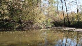 秋天横向 干燥叶子落河水表面上  股票视频